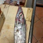 pesce-avariato1