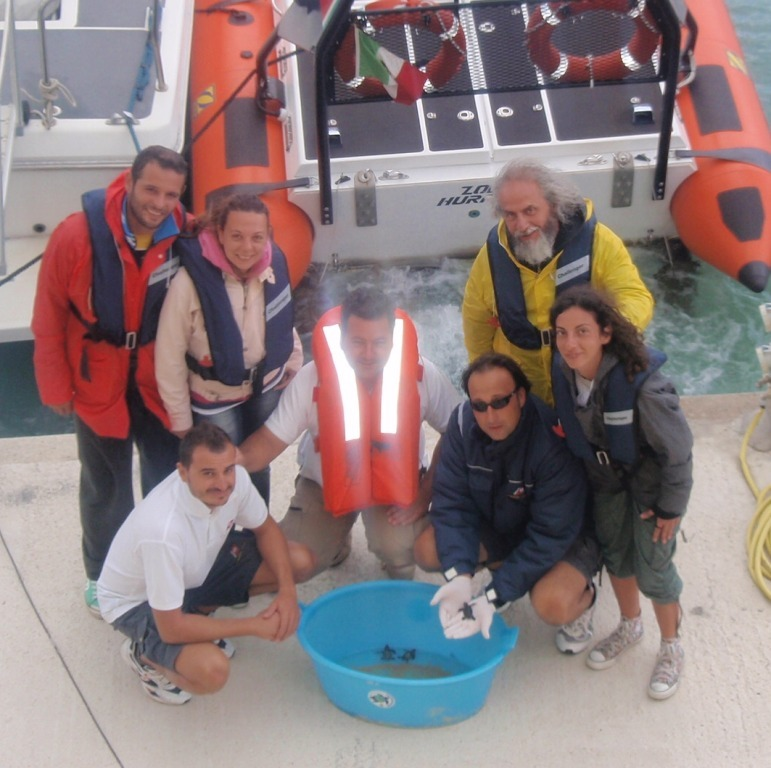 Realmonte wwf libera in mare 6 tartarughe appena nate for Tartarughe appena nate