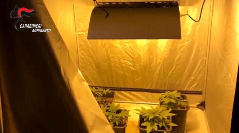 CAMPOBELLO DI LICATA – Gestivano piantagione marijuana: arrestati due coniugi